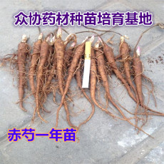 1PC Herbaceous Peony Bulb Flowers Bulbs Potted Home Garden Balcony Plant Bulbous Not Seeds High Germination Rate Bonsai 14