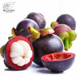 50Pcs/Pack Mangosteen Seeds Tropical Sour Sweet Fruit Seeds Garden Plants Tree Bonsai