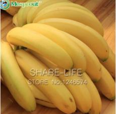 100pcs Big Hainan Yellow Banana Seeds