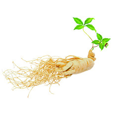 10PCS Chinese/korean Panax Ginseng Seeds Asian Fresh for Planting Nutrition