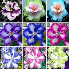 100 pcs/bag Rare african violet seeds, bonsai flower seeds, garden flowers violet seeds perennial herb plant pot for home garden