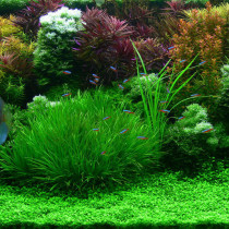 Aquarium Grass Seeds Water Aquatic Plant Seeds (Mix Included 15 Kinds) 1000PCS/pack