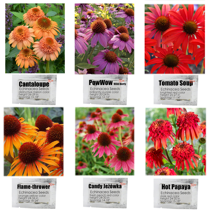 6 Packs Echinacea Purpurea Coneflower Seeds 6 Color Varieties