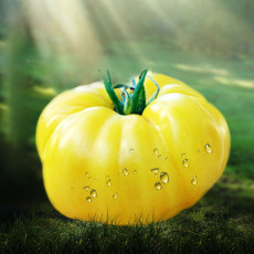 Dixie Golden Giant Tomato Seeds Yellow Big Tomato Fruits Beefsteak Tomatoes Lycopersicon esculentum