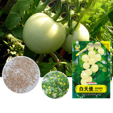 High Yield  'White Angel' White Round Truss Cherry Tomato Seeds Original Pack 100 Seeds
