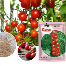 'Star Ruby' Small Round Red Truss Cherry Tomato Seeds Original Pack 200 Seeds