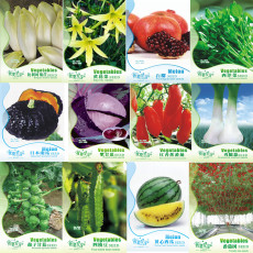 Original Pack Combos Garden Planting Seeds Chicory Day Lily Green Vegetables Black Pumpkin Tomato Watermelon etc.