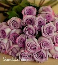 120 Sterling Silver Rose Seeds