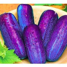 100Pcs/Pack Purple Cucumber Seeds Garden Farm Vegetable Plants Seeds