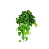 Exotic Climbing Epipremnum Aureum Bonsai,Indoor Office Desk Aquatic Plants Purify Air Absorb Harmful Gases Living Room 100 Pcs