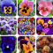 200Pc Mexican Imported Pansy Bonsai Mix Color Wavy Viola Tricolor Flower Bonsai Potted Home Garden - (Color: Mix)