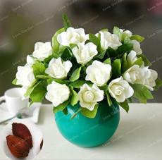 Rare Gardenia Bonsai(Cape Jasmine) Amazing Smell & Beautiful Flower Bonsai Tree Potted for Home Garden Plant 5 Pcs/Bag Potted