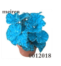 200 pcs Begonia Flower Seed Flowers Potted BSeed Garden Courtyard Balcony Coleus for Home Garden Flowers Seedling Outdoor - (Color: 3)