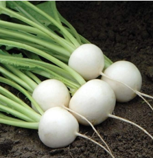 Hakurei F1 Turnip 200 Seeds This Is the One That Sets the Standard for Flavor