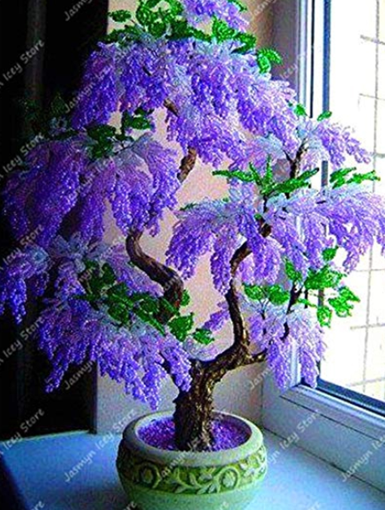 5pcs Purple Wisteria Bonsai Tree Seeds Ebay