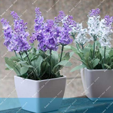 100 PCS/Bag French Provence Lavender Bonsai Very Fragrant Organic Lavender Plant Flower Flower Bonsai Home Garden Bonsai