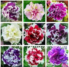 100 pcs/Bag Mixed Color Flower Petunia Bonsai Exotic Bonsai Flowers Hanging Petunia Petals Flower Flores Garden Petunia Plants - (Color: Mixed)