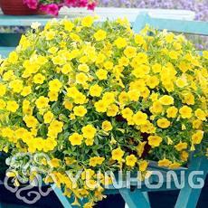 100PCS Mini Calibrchoa Million Bells Annual Flower Bonsai Seeds