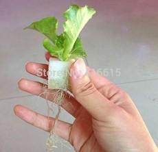 Foam Cubes for Starting Seeds Nursery Sponge for Hydroponics System Seedling Sponge Soilless Cultivation (117pcs-pack)