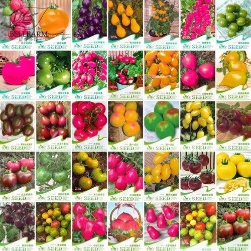 BELLFARM Combo 30 Packs Tomato Bonsai Small Middle Big Fruits Red Yellow  Black Home Garden Organic Tomato Plants Organic