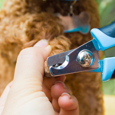 OneBling Stainless Steel Pet Nail Clipper Pet Grooming Scissors Animal Nail Scissor Nail Cutter Pet Claw Care Tools