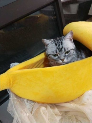 OneBling Banana Cat Bed Dog Puppy Cushion Pet Beds Kittens Supplies