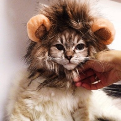 OneBling Cat Dog Costume Lion Mane Wig Cap Hat Halloween Christmas Pet Clothes