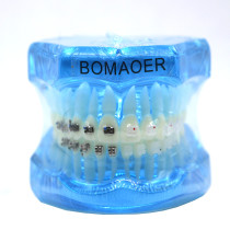 Dental orthodontic teach study teeth model mental and ceramic bracket contrust